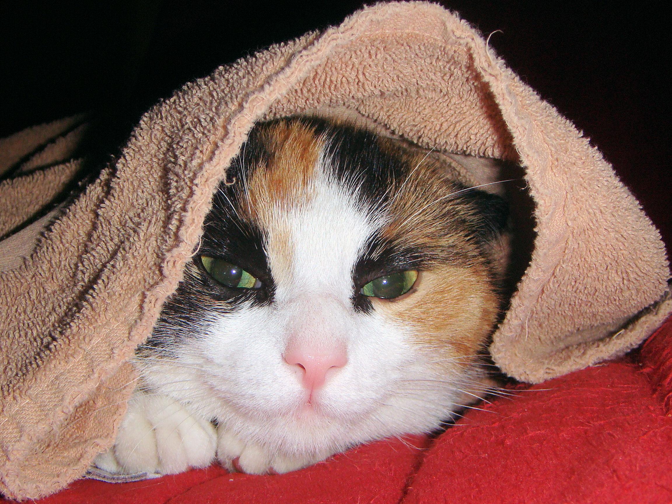cat-1147180_17327772