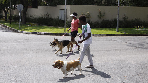 africa-dogs-ap369500641430_620x350